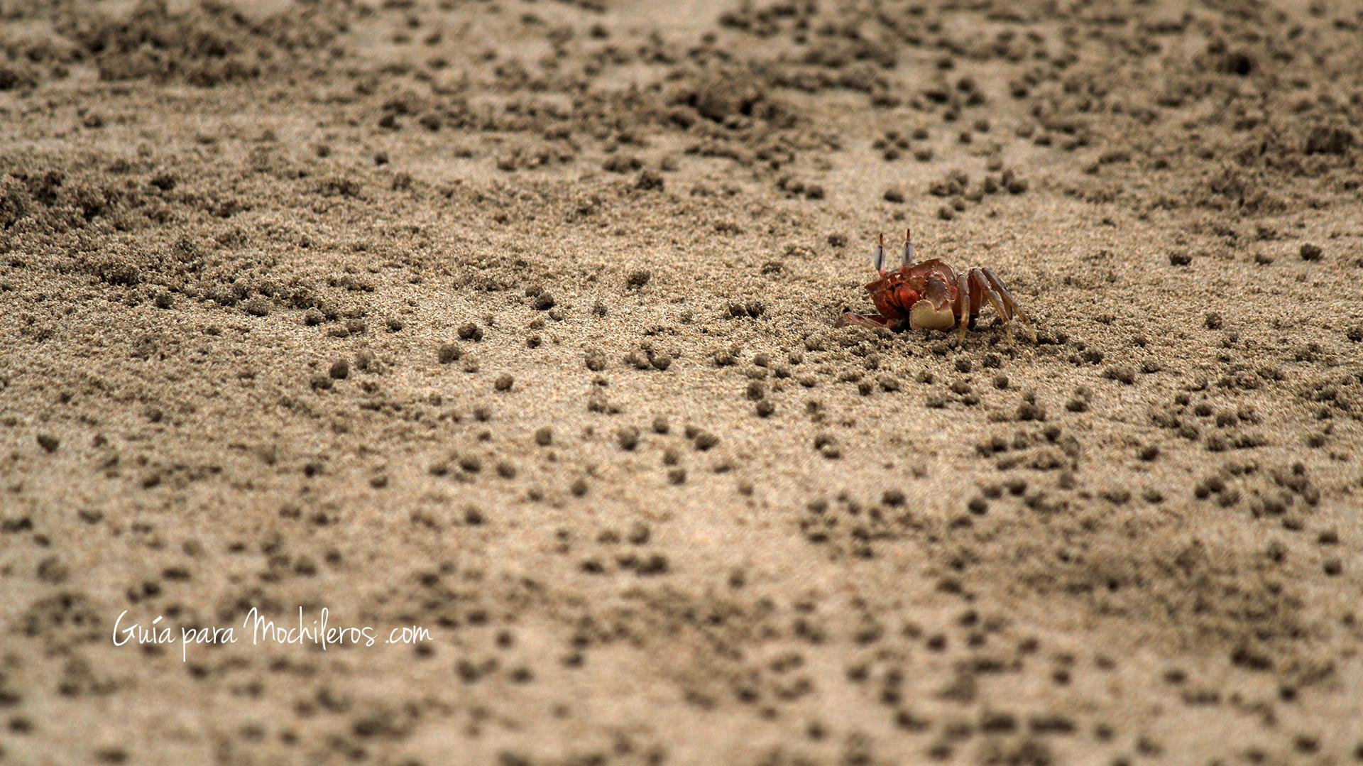 Las playas de Montañitas estan llenas de cangrejos corriendo por sus vidas :P