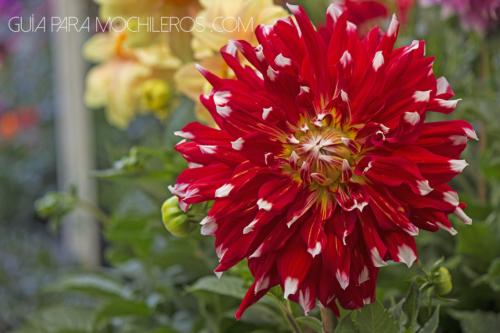 Flor nacional mexicana