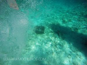 Nadar con rayas Belice