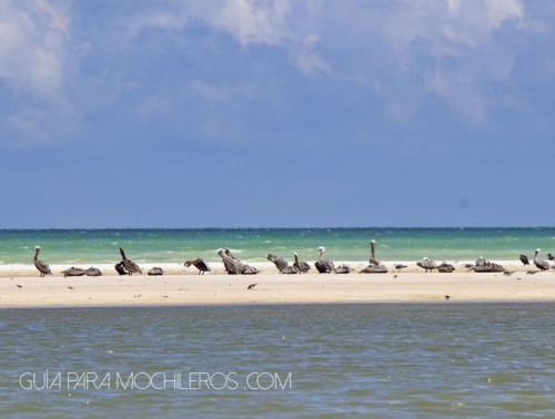 aves en playa
